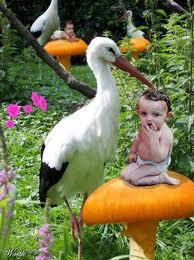 odakle dolaze bebe