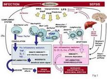 endotoksiki-sok