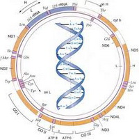 Mitohondrijalne_bolesti