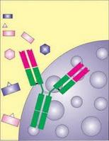 Imunologija