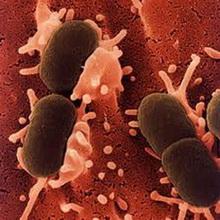 Bakterije_uzvracaju_udarac