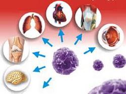 maticne-celije