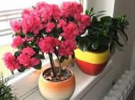 biljke-ne-podnose-suv-vazduh