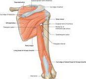 Povrede_ramena