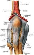 Povrede_ligamenta_kolena