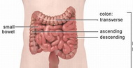 Sindrom-iritabilnog-kolona-kolitis
