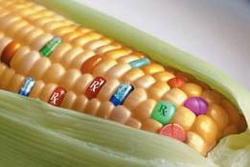 Genetski_modifikovana_hrana