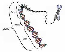 Genotoksikologija
