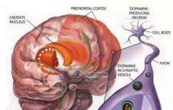Oksitocin__vazan_u_majcinstvu_ali_i_u_ocinstvu