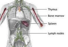 akutna-limfocitna-leukemija