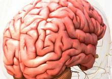 rast-ljudskog-mozga