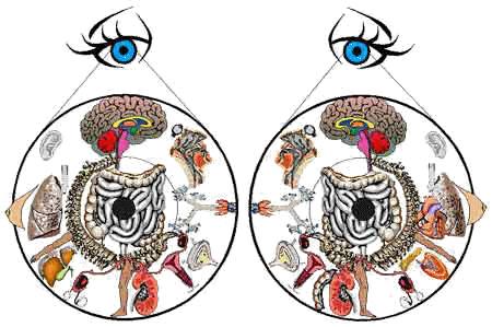 iridology_chart_large