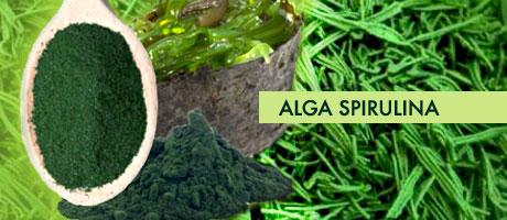 alga-spirulina1