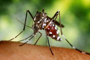 Zika_virusna_infekcija