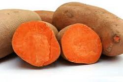 Zdrava namirnica batat-slatki krompir
