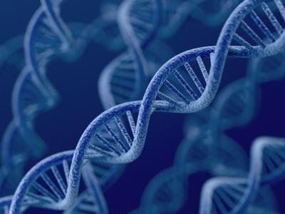 Šta je zapisano u genima?